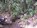 Trail da Pedra da Cruz, Cota 2000^ - panoramio.jpg