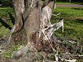 Tree covered by net2.jpg