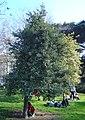 Tree dsc00837.jpg