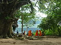 Tree soul ethnic ....JPG