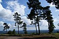 Trees on Leith Hill - geograph.org.uk - 1591693.jpg