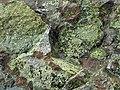 Trevorite-Népouite-536296.jpg