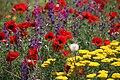 Tricolor Lawn Mount Ara.jpg