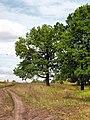 Tula region Near Shchyokino IMG 5149 1280.jpg