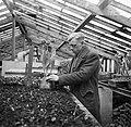 Tulp Commander den Ouden te Noordwijk, Bestanddeelnr 904-4690.jpg
