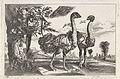 Twee struisvogels.jpeg