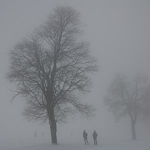 Two in the fog