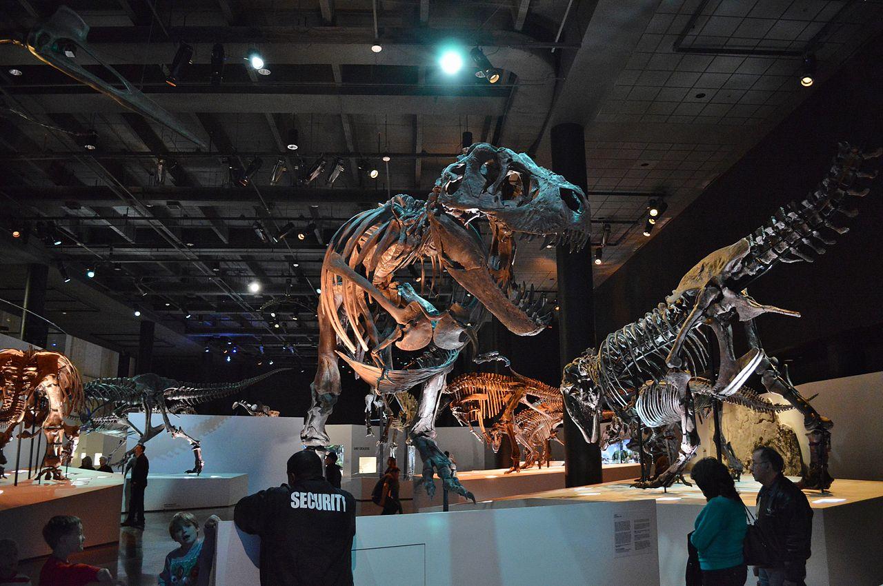 Houston Museum Natural Science Dinosaur Exhibit