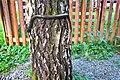 Užovka stromová (4).jpg