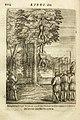 UB Maastricht - Trigault 1623 - p 204.jpg