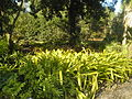 USF Botanical Garden5.JPG