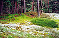 Ullahau-Naturreservat-Faaro-Gotland-2010 03.jpg