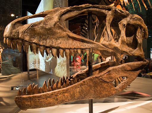 Ultimate Dinosaurs Carcharodontosaurus