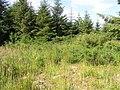 Umrycam Forest - geograph.org.uk - 1380126.jpg