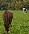 Une paire de chevaux broutant l'herbe (22839285541).jpg