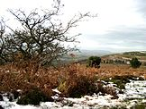 Upland scrub on the Quantock Hills