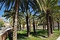 VIEW , ®'s - DiDi - RM - Ð 6K - ┼ , MADRID PARQUE de PEÑUELAS JARDÍN - panoramio (164).jpg