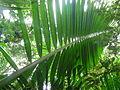 Vegetación de la Reserva de la Biosfera La Amistad Panama (RBLAP) 07.JPG