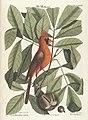 Verzameling van uitlandsche en zeldzaame vogelen (Tab. LXXVI) (7894233908).jpg