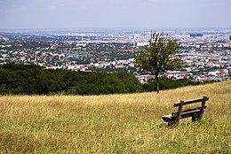 Vienna from tiergarten.jpg
