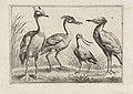 Vier waadvogels.jpeg