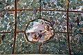Villa giulia, portici con affreschi di pietro venale e altri, pergolato 15.jpg