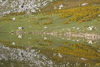 Vistas lagos de covadonga 03.jpg