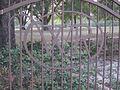 WR (William Rainach) fence initials IMG 5238.JPG