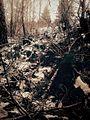 W lesie - panoramio (17).jpg