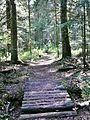 Waldmoor-Torfstich, Würzbacher Moor - panoramio (1).jpg
