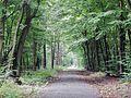 Waldweg bei Neu-Isenburg - panoramio.jpg