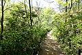Walkway - Institute for Nature Study, Tokyo - DSC02111.JPG