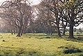 Walnuts at Watton - geograph.org.uk - 300053.jpg