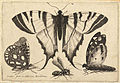 Wenceslas Hollar - Three butterflies and a wasp (State 1).jpg