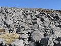 West slope of Garreg Las - geograph.org.uk - 152252.jpg