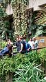 Wikimedians explore the Barbican Conservatory 5.jpg
