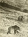 Wild animals of Glacier National Park. The mammals, with notes on physiography and life zones (1918) (14745481251).jpg