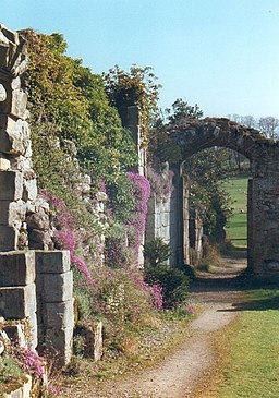 Wildflowers and creeper on ancient walls at Jervaulx Abbey - geograph.org.uk - 324211