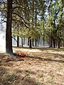 Willard Fire- using wildfire to benefit the forest (14548745390).jpg