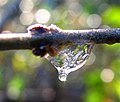 Winter Refraction (4260663665).jpg