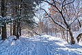 Winter Trail at Battle Creek Regional Park, Saint Paul, Minnesota (47206742192).jpg
