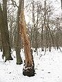 Winter in Elmstead Woods (7) - geograph.org.uk - 1655694.jpg