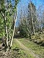 Woodland track Highfield Hill Batcombe Dorset - geograph.org.uk - 158273.jpg