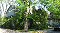 Woodlawn Avenue South, 510, Elm Heights HD.jpg