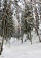 Zavolzhsky District, Ivanovo Oblast, Russia - panoramio - Andris Malygin (10).jpg