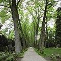 Zeist - Park begraafplaats Bergweg RM510196.JPG