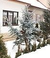 Zima 2010 01 22 1094.JPG