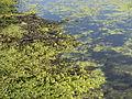 Zuid-Kennemerland 20110327 46.JPG