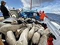 'ΑΝΑΓΚΑΣΤΙΚΟΣ ΣΥΝΕΤΑΙΡΙΣΜΟΣ ΡΗΝΕΙΑΣ' - Νησίδες Μυκόνου.jpg