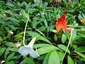 (Jardín Botánico de Quito) pic b08.JPG